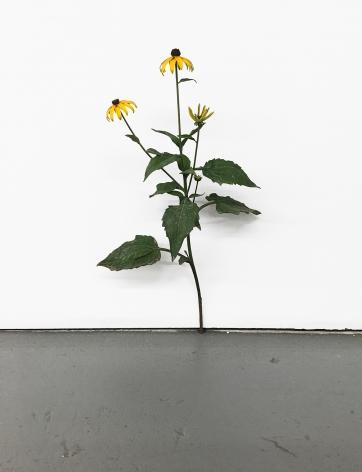 Tony Matelli Weed #374, 2017