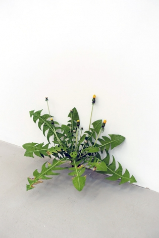 We encounter the art version of these in sculptor Tony Matelli's hyper-real bronzes. Budding flower stalks and leaf fronds—titled Weed #334 and Weed #374 and Weed #365—which, complete with pollution dust, sprout boldly from betwixt wall and door.