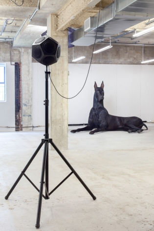 Peter Coffin Untitled (Pet Shop) (Dog)