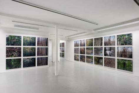 Joseph Bartscherer: Forest– installation view 8