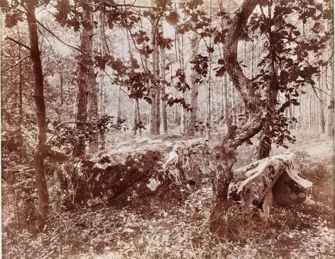 Eugѐne Atget Fontainebleau