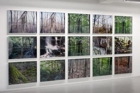 Joseph Bartscherer: Forest– installation view 3
