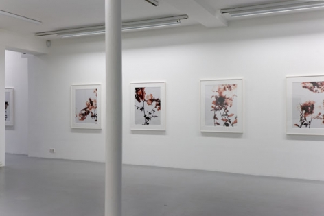 James Welling – installation view 4