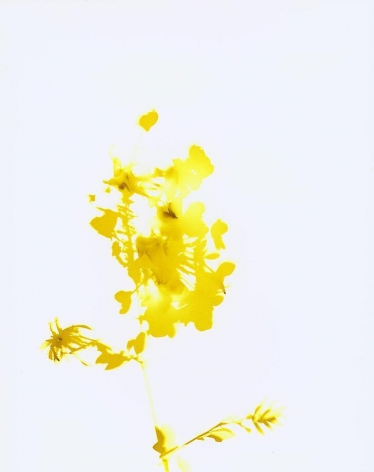 James Welling , Flower # 18