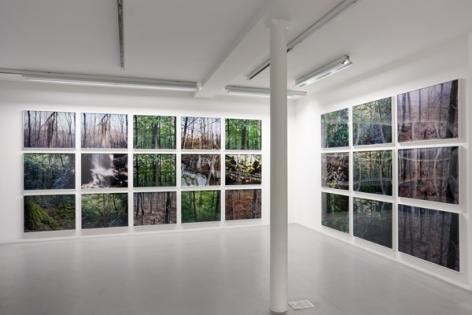 Joseph Bartscherer: Forest– installation view 7