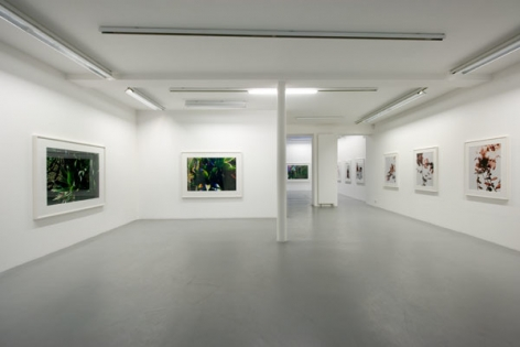 James Welling – installation view 1