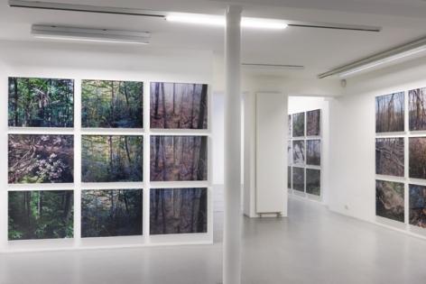 Joseph Bartscherer: Forest– installation view 2