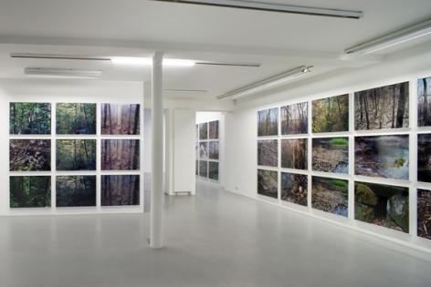 Joseph Bartscherer: Forest– installation view 4