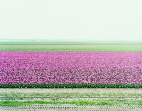 landscape with pink flowers by thomas fletchner