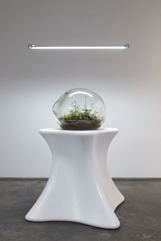 plants in a clear orb on a pedestal by paula hayes