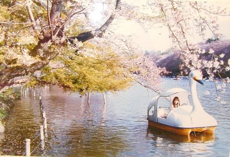 Aki Fujimoto, Solitary Swan, 2003
