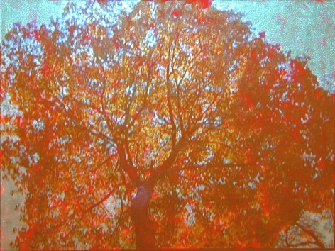 Gold / Tree, 2003, Video projection, oil and enamel on linen