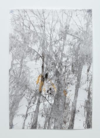 Anne Allen, Big Cypress IA, 2013