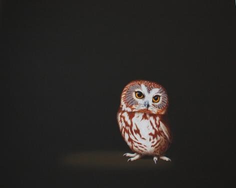 Isabelle du Toit, Saw Whet Owl, 2013