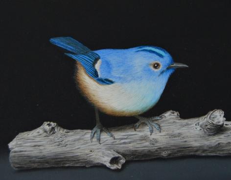 Isabelle du Toit, Blue Goldcrest on Branch (detail), 2020