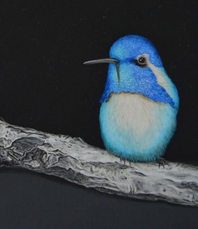 Isabelle du Toit, Blue Costa's Hummingbird (detail), 2020