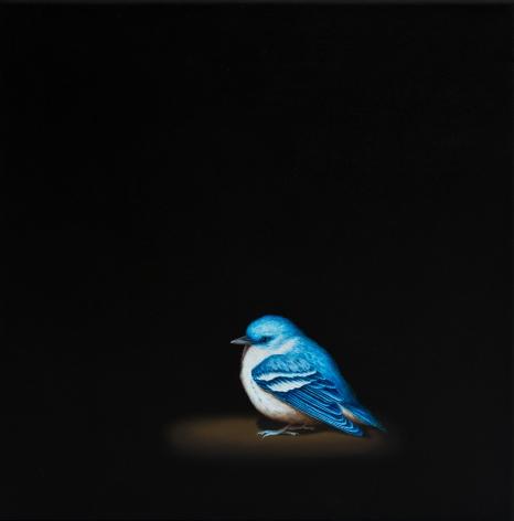 Isabelle du Toit, Cerulean Warbler, 2012