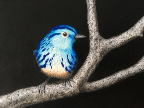 Isabelle du Toit, Blue Black and White Warblers (detail), 2020