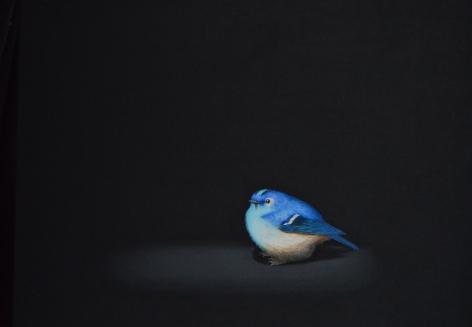 Isabelle du Toit, Blue Goldcrest, 2020