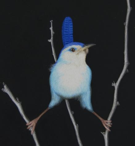 Isabelle du Toit, Blue Marsh Wren (detail), 2020