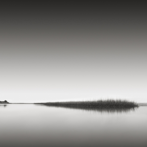 David Fokos, Reeds, Edgartown, Massachusetts 2012, 2012