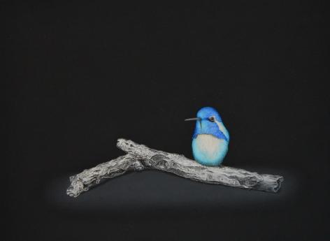Isabelle du Toit, Blue Costa's Hummingbird, 2020