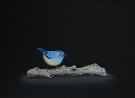 Isabelle du Toit, Blue Goldcrest on Branch, 2020