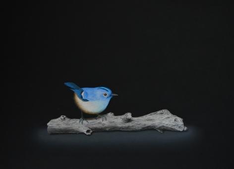 Isabelle du Toit, Blue Goldcrest on Branch, 2020