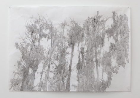 Anne Allen, Big Cypress I, Caddo, 2013