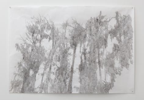 Anne Allen, Big Cypress I, Caddo, 2013
