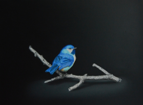 Isabelle du Toit, Blue Boreal Chickadee, 2020