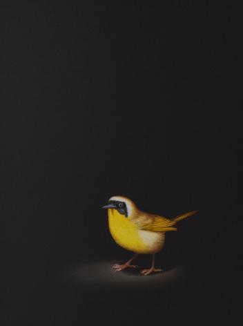 Isabelle du Toit, Yellowthroat, 2020