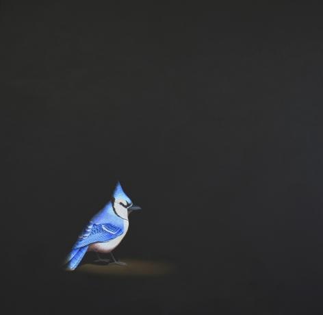 Isabelle du Toit, Blue Jay II, 2010