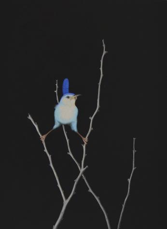 Isabelle du Toit, Blue Marsh Wren, 2020