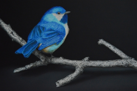 Isabelle du Toit, Blue Boreal Chickadee (detail), 2020
