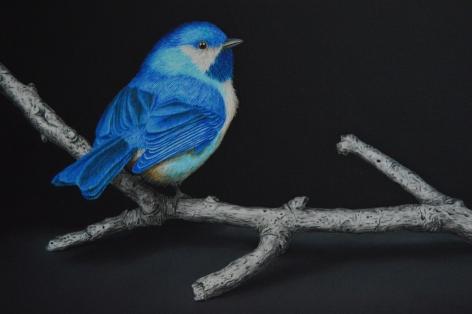 Isabelle du Toit, Blue Boreal Chickadee (detail), 2020