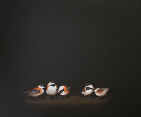Isabelle du Toit, Banditry of Chestnut-Sided Chickadees, 2012