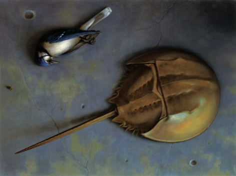 wade schuman, Horseshoe Crab, Bird and Fly, 2003, oil on linen laid down on board, 17 1/2 x 23 inches