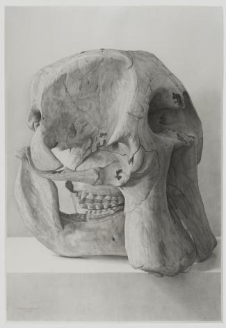 Claudio Bravo, Elephant Skull, 2006, pencil on paper, 43 1/4 x 29 1/2 inches