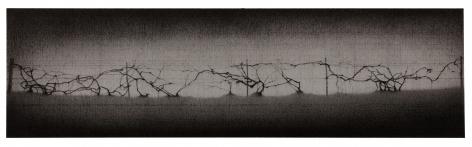 anthony mitri, Grapevine, Bundysburg, 2017, charcoal on paper, 7 1/2 x 26 1/2 inches