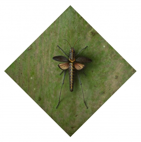 Wade Schuman, Insect, 2014, oil on linen on panel, 12 1/2 x 15 1/2 inches