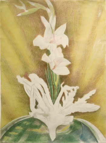 Joseph Stella, Gladiolas, c. 1935, colored pencils and pencil on paper, 25 x 18 1/2 inches, 37 1/2 x 30 1/2 inches (framed)