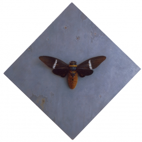 wade schuman, Insect (SOLD), 2006-2007, oil on linen laid on panel, 13 1/4 x 13 1/2 inches