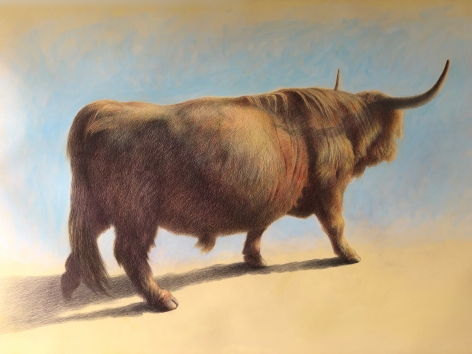 Wade Schuman, Bull, 2020, ballpoint pen and acrylic on prepared paper, 27 x 40 inches