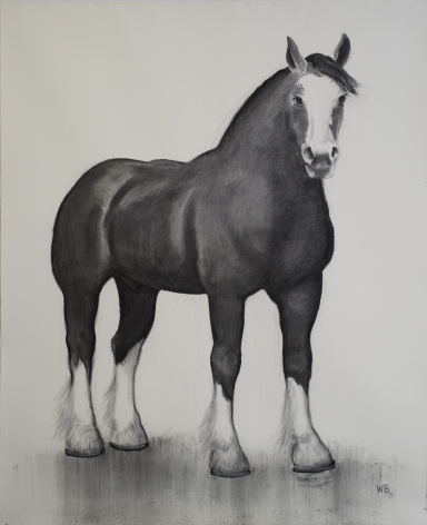 William Beckman, Clydesdale, 2016-17, charcoal on paper, 114 x 88 inches