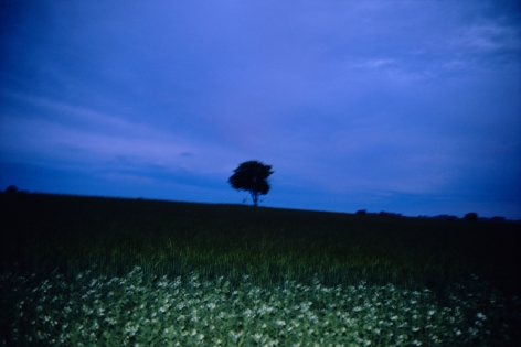 the lonely tree, sweden