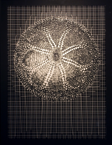 Abdullah M. I. Syed Flare I (Ed. of 10) Silkscreen on BFK Rives 21.5 x 29.5 in. 2013