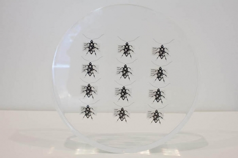Tazeen Qayyum HARMFUL IF SWALLOWED 2009 Screen print on clear acetate embedded in Lucite 9 dia x 1.5 in. NFS