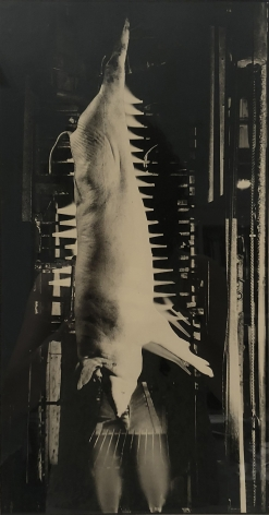 Margaret Bourke-White, Each hog is singed by cleansing jets of flame, 1929. A hog carcass hangs by its rear legs in a dark chamber.
