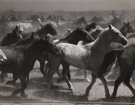 Leonard McCombe, Untitled, ​1951. A large group of horses in motion.